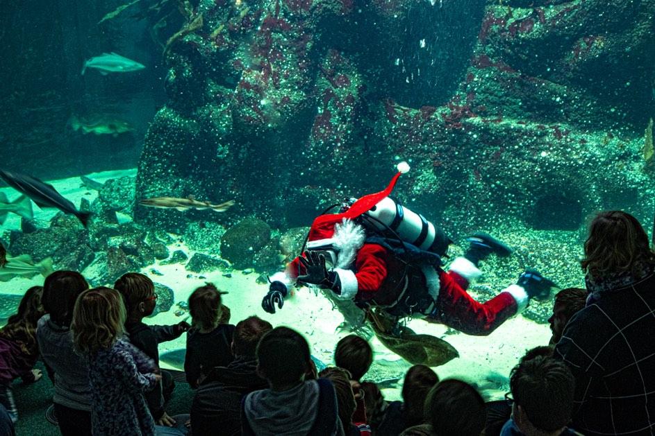 Der Nikolaus im großen Aquarium des Multimar Wattforum in Tönning